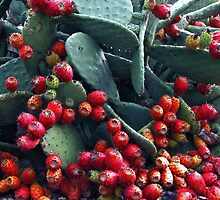 Opuntia by mogue