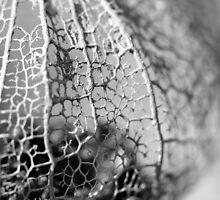Delicate by Julie van der Wekken