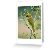 Spectacled Weaver Greeting Card