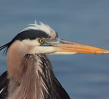 Is this my good side ? by kathy s gillentine