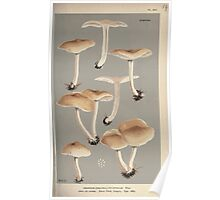 Illustrations of British Fungi by Mordecai Cubitt Cook 1891 V2 0181 AGARICUS  COLLYBIA  XYLOPHILUS Poster