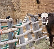 Fence Gossip by © Betty E Duncan ~ Blue Mountain Blessings Photography