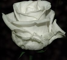 White Princess by marco10
