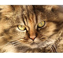 Furry Buddy Photographic Print