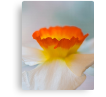Beautiful Blur  - Close Up Daffodil Bloom Canvas Print