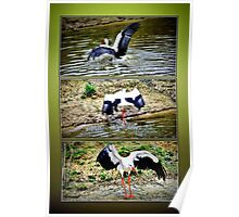 Wet waterfowl Poster
