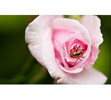 Jiminy II Photographic Print