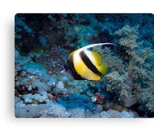 Red Sea Bannerfish Canvas Print