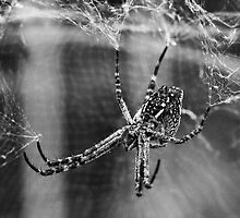 Hanging on by Liza Yorkston