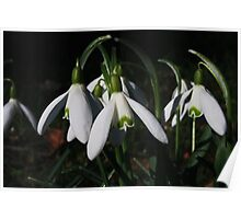 First Sign Of Spring Poster