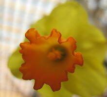 Sunny Daffodils by MarianBendeth