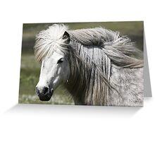 Shetland Pony Mare  Greeting Card