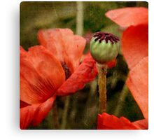 ... and red grow the poppies ... Canvas Print