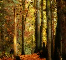 Fall Walk by Tracy Riddell