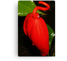Red Squiggle Top - a Deformed Anthurium? Canvas Print