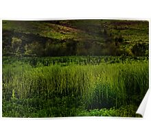 Grassy Meadow Poster