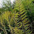 Forest ferns by Ms-Bexy