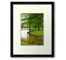 Cypress Knees Framed Print