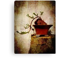 Cascading Bonsai In Training  Canvas Print