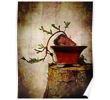 Cascading Bonsai In Training  Poster