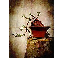 Cascading Bonsai In Training  Photographic Print
