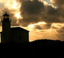 Coquille Silhouette by Sherrie Chavez