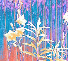 Bellflowers-Picture in gentle and smooth colours by Carine Werthmann