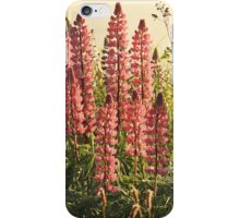 Wild Yarmouth Nova Scotia Lupins iPhone Case/Skin
