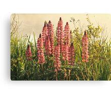 Wild Yarmouth Nova Scotia Lupins Canvas Print