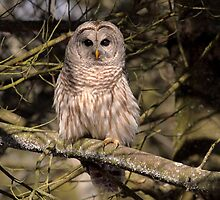Barred Owl in Dappled Light by Gary Fairhead