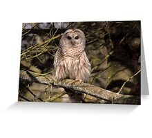Barred Owl in Dappled Light Greeting Card