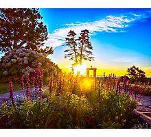 Sunny Morning Photographic Print
