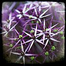 ALLIUM #1 by Jackie Cooper