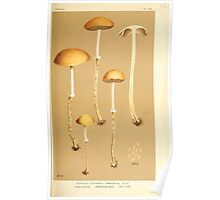 Illustrations of British Fungi by Mordecai Cubitt Cook 1891 V4 0431 AGARICUS  STROPHARIA  THRAUSTUS Poster