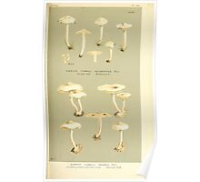Illustrations of British Fungi by Mordecai Cubitt Cook 1891 V4 0149 AGARICUS  FLAMMULA  SCAMBUS Poster