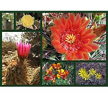Flowers & Cacti in the Southwest Photographic Print