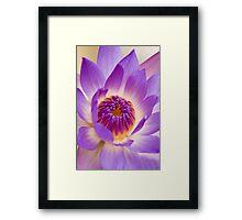 Shining Thru - purple waterlilly Framed Print