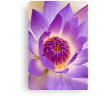 Shining Thru - purple waterlilly Canvas Print
