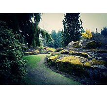 Moss Covered Photographic Print