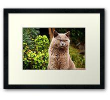 Mizzer the Mafia Cat Framed Print