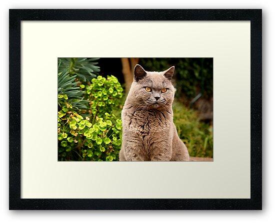 Mizzer the Mafia Cat by Pauline Winwood