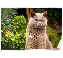 Mizzer the Mafia Cat Poster