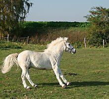 White Horse by Stefanie Köppler