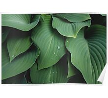 Abstact Leaves Fine Art Photography Poster