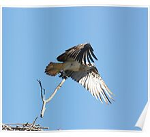 Nest Building 3 Poster