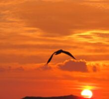Seagull in sunset Sticker