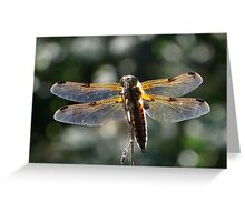 The four-spotted Chaser Greeting Card