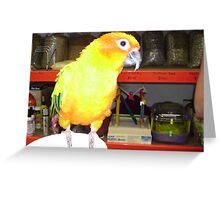 Bright Yellow Parrot in Pet Shop. Greeting Card