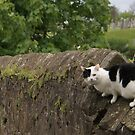 looking out for new friends in Stirling by BronReid
