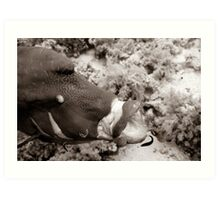 Cleaning a humphead wrasse Art Print